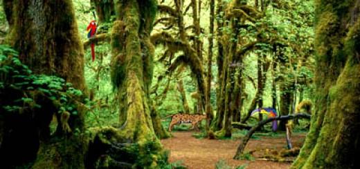 Natur Bildschirmschoner Kostenlos Downloaden Bei Nowload